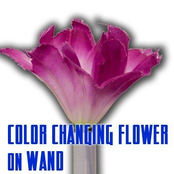 color changing flower on wand